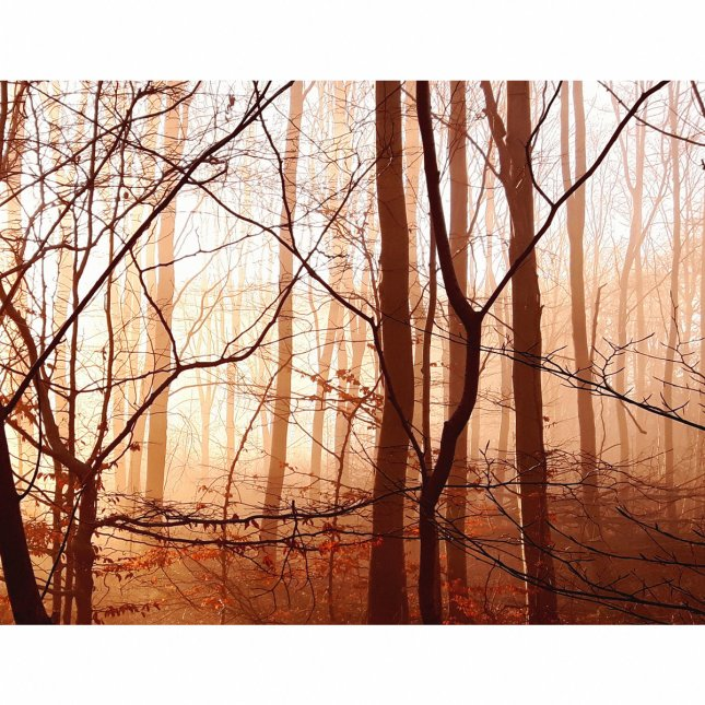 Rime_Trails_Sacred_Groves_cover